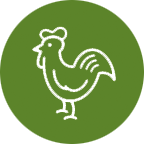 <p>Real chicken is the #1 ingredient</p>