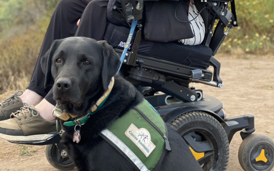 Canine Assistant Spirit, a black lab, sits outside next to his partner, Sean, who is sitting in a wheelchair
