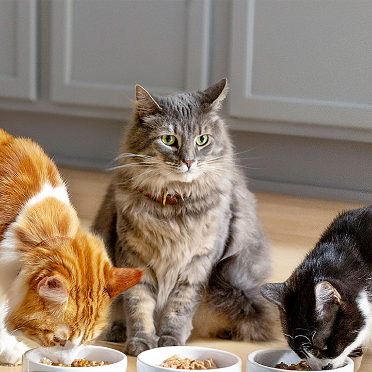Picky Cat Probs? Here′s What to Do for a Finicky Eater