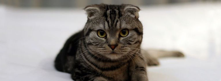 7 Cat Breeds with Unusual Features