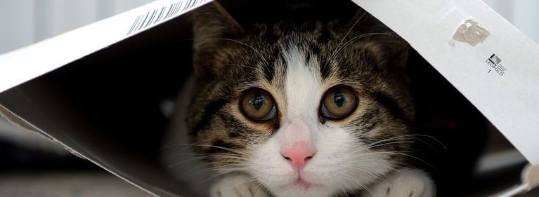 4 Reasons Cats Love Boxes